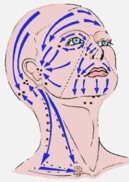 Лимфодренажный массаж. Линии и направление.