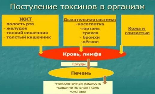 схема распространения токсинов